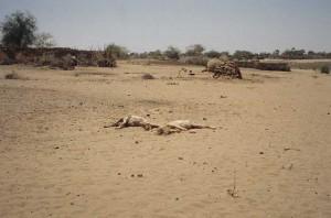 Susuzluktan ölen hayvanlar